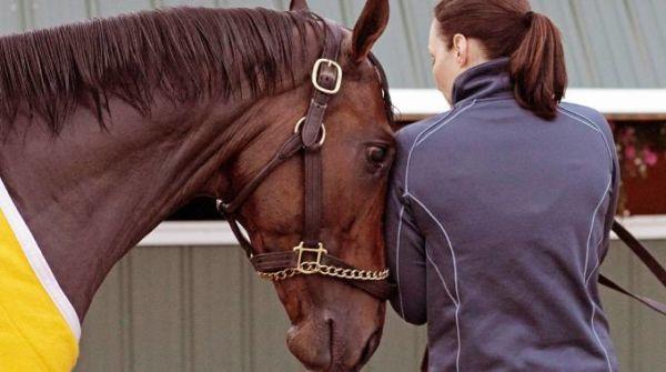 I cavalli capiscono i nostri sentimenti