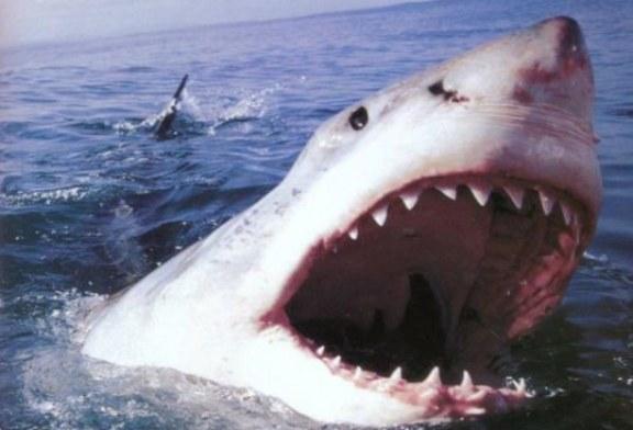 Specie di squalo da temere al mare. Un motivo in più per starsene in spiaggia?
