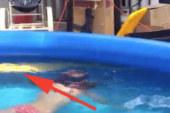 Nulla di importante da vedere qui, solo un pitone giallo gigante che nuota con una bambina.