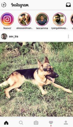Instagram copia Snapchat con Instagram Stories. Profilo di ale_wonder