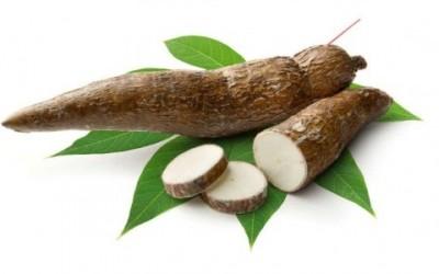 La manioca - cibi velenosi che mangiamo quasi tutti i giorni