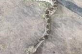 Gli effetti del veleno del morso di un serpente a sonagli documentati dal cantante Kevin Fowler.