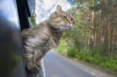 17 consigli per viaggiare in macchina con il proprio gatto