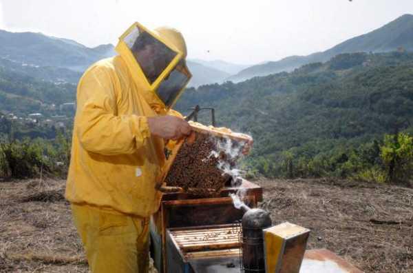 gli apicoltori sono immuni dai tumori grazie al veleno delle loro api ed al miele che mangiano
