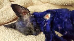 gattina viola salvata da torture
