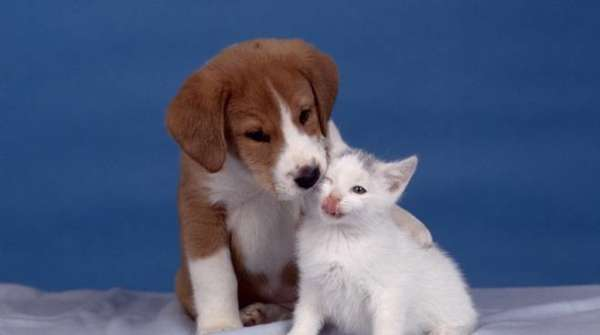 Chi tra cane e gatto tiene di più al proprio padrone?