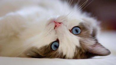 un dolce micio per la giornata mondiale del gatto
