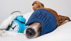 Shhhh si dorme! - Consigli per svegliarsi presto senza traumi!