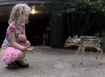 video virali - bambina cerbiatto