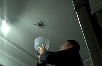 ragno non prende bene i tentativi per catturarlo