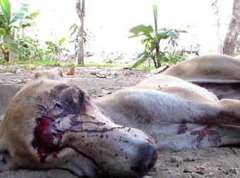 salvataggio cane indiano
