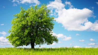 guardare alberi stress