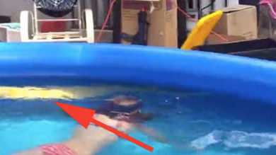 pitone giallo nuota con bambini
