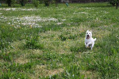 sfruttare il cane per mettersi in forma
