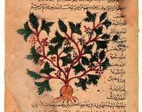 manoscritto di medicina antica naturale