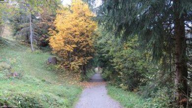 Rimedi naturali per affrontare l'autunno