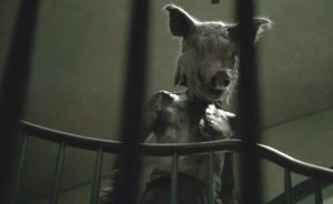 american horror story cronologia - Piggy Man