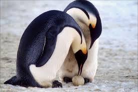 film da vedere in inverno - l'amore tra i pinguini