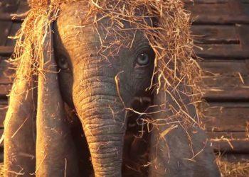 Dumbo a marzo al cinema