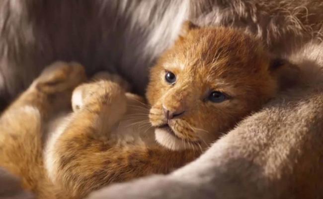 Il piccolo Simba ne Il Re Leone