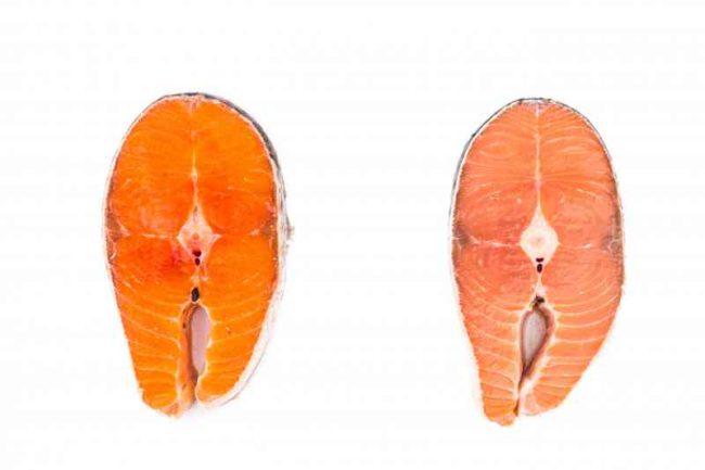 salmone d'allevamento nocivo