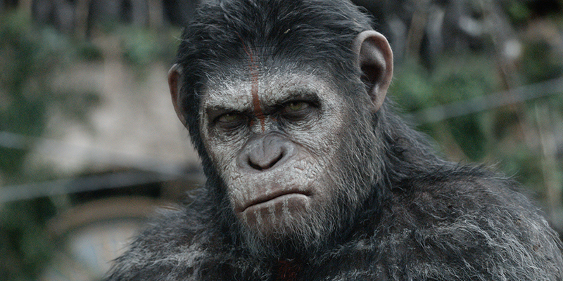 Il Pianeta Delle Scimmie nuovo capitolo